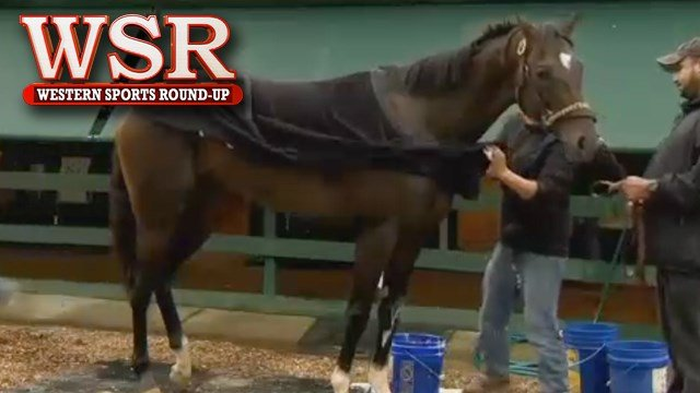 """Kentucky Derby winner """"Always Dreaming"""" arriving in Baltimore on Tuesday and is getting ready for the 142nd Preakness."""