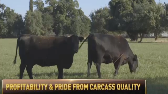 Beef producers are taking pride in seeing their products in supermarkets.