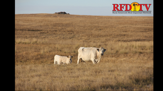The conditions that the state is under is causing producers to bring livestock to auction prematurely.