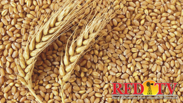 The USDA forecasts global wheat production to fall for the first time in five seasons.