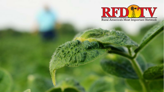 Arkansas and Missouri issue emergency bans on the use and sale of Dicamba herbicides after a sharp rise in pesticide drift damage reports.