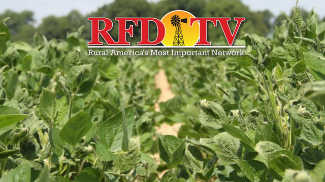 Tennessee Agriculture Commissioner, Jai Templeton, joined us to talk about Dicamba drift concern in the state.