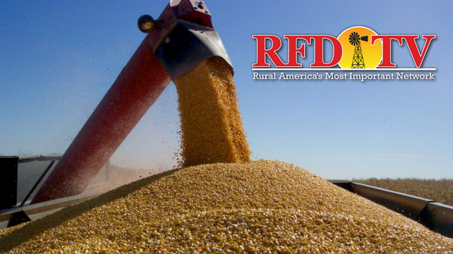 David Gibson joins us to talk about the corn conditions in Texas as harvest is underway.