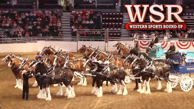 Express Ranches Clydesdales