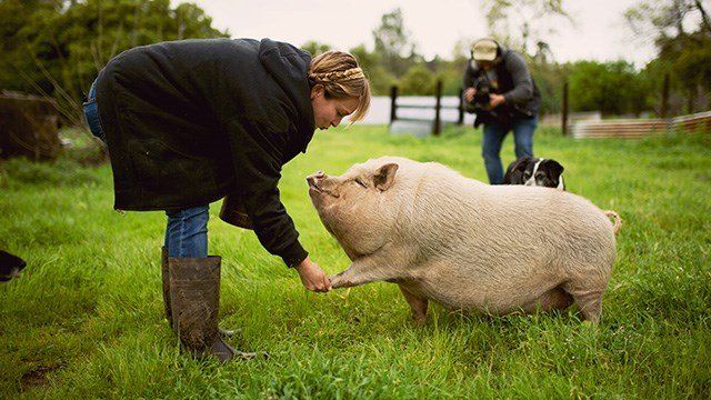 FarmHer Megan Brown and her not so little teacup pig.