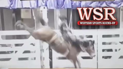 Amy Wilson walks us through the results from Ft. Worth Stock Show and Rodeo.