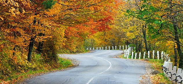 Road through a forest during autumn.