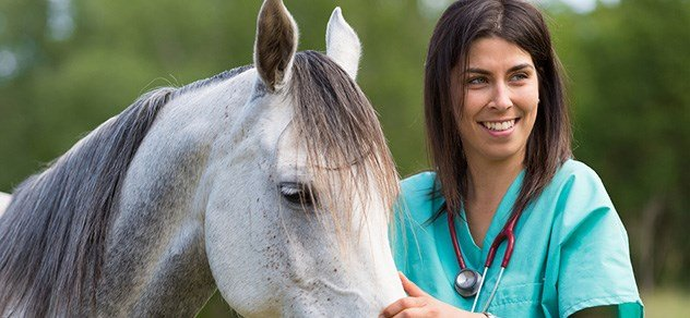 Veterinarian with horse.