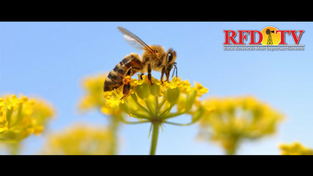 RFD-TV will be providing you with stories about the importance of saving these pollinators.