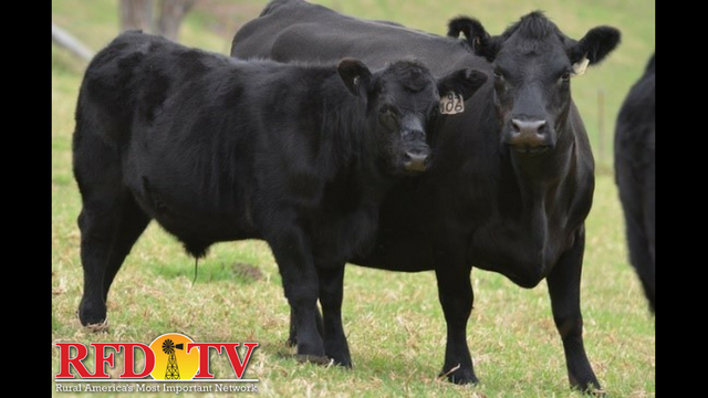 In a competitive meat case, it's important for high-quality beef products to stand out.