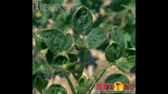 Many soybean producers are turning to Dicamba to keep weeds at bay.