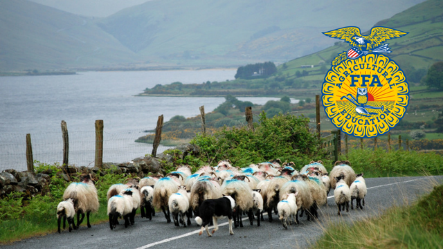 52 National FFA award winners travelled to Ireland to see agriculture practices.