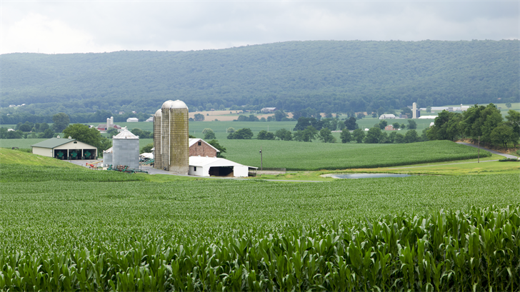 Overlooking a corn field with barns in the background