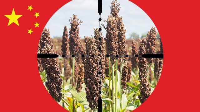 China takes aim at U.S. sorghum in the latest round of the continuing trade spat.