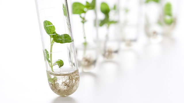 Plants in test tubes in a laboratory