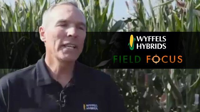 Wyffel's Hybrids – Our Advantages