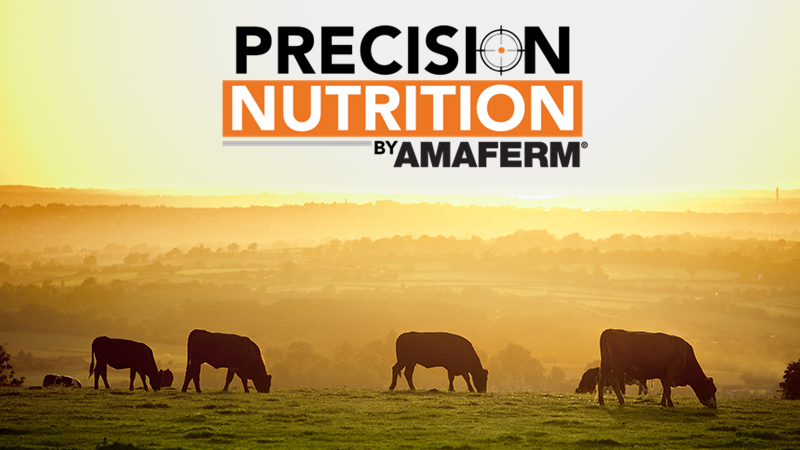 Precision Nutrition by Amaferm