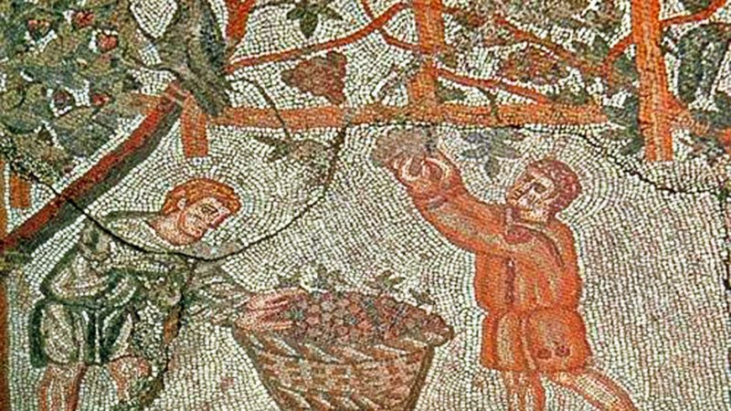 An ancient mosaic depicting the grape harvest.