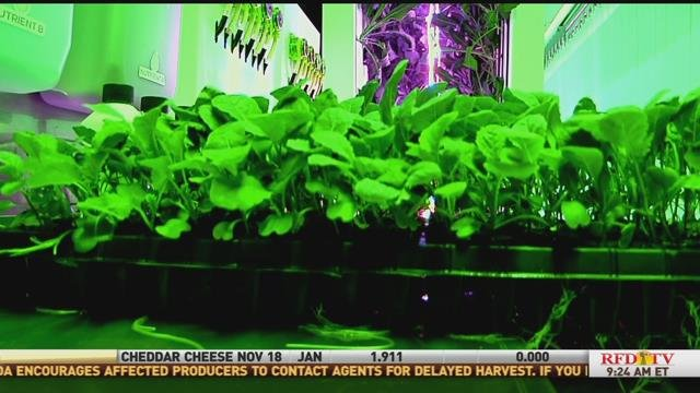 Crops growing in LED light.