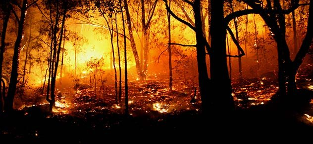 Soda Wildfire has destroyed almost 300,000 acres.