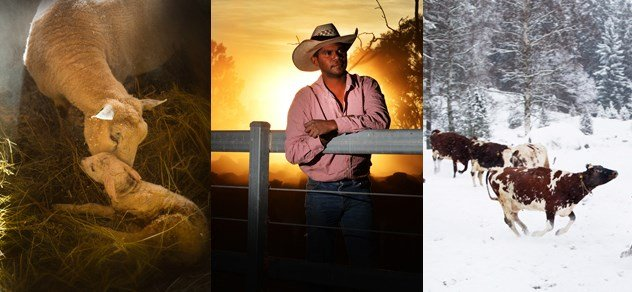 Some of the winners from the 2015 IFAJ Photo Competition
